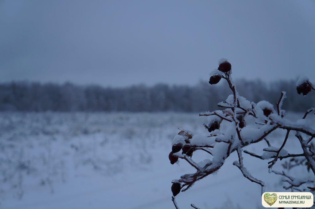 dsc08332 - Зимой в деревне скучно? Это не про нас!